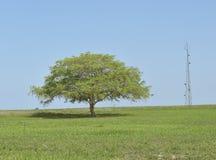 Сиротливая башня дерева и связи Стоковые Изображения