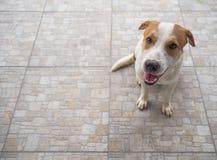 Сиротливая бездомная собака Стоковые Фото