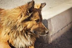 Сиротливая бездомная собака outdoors Стоковые Фотографии RF