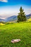 Сиротливая ель на краю наклона в туманные горы на sunri Стоковые Изображения RF