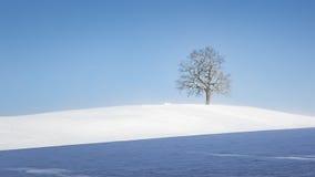 сиротливая зима вала Стоковые Изображения RF