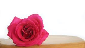 Сиротливая красная роза на деревянном столе Стоковое фото RF