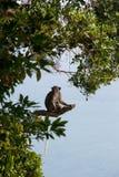 Сиротливая молодая обезьяна Стоковое Фото