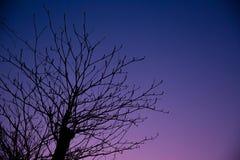 Сиротливая ноча, небо сумрака сезона падения лета красивое Стоковые Фото
