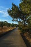 Сиротливая дорога в поле Стоковые Изображения