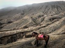 Сиротливая лошадь вокруг горы Bromo Стоковое фото RF