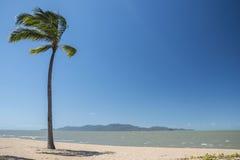 Сиротливая пальма на пляже в Квинсленде, Австралии Стоковая Фотография