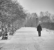 Сиротливая персона в парке Стоковая Фотография