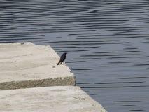 Сиротливая птица стоковые изображения rf