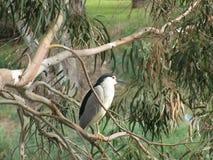 Сиротливая птица Стоковые Изображения
