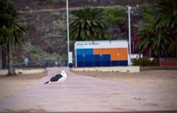 Сиротливая птица Стоковое фото RF