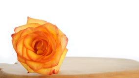 Сиротливая роза апельсина на деревянном столе Стоковые Фотографии RF
