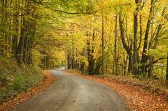 Сиротливая сельская дорога с цветами падения Стоковая Фотография