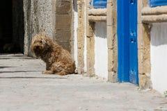 Сиротливая собака в порте Essaouira, Марокко стоковое изображение rf