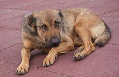 Сиротливая собака лежит вниз в парке, Турции стоковая фотография