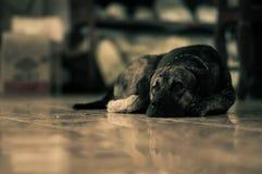 Сиротливая собака Стоковые Изображения