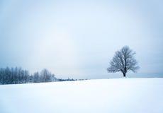 Сиротливое дерево в дереве ландшафта зимы в ландшафте зимы Стоковая Фотография