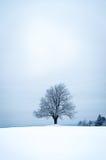 Сиротливое дерево в дереве ландшафта зимы в ландшафте зимы Стоковые Фотографии RF