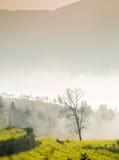 Сиротливое дерево в долине Стоковая Фотография