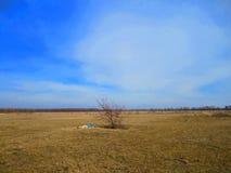 Сиротливое дерево в полях Стоковые Фотографии RF