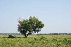 Сиротливое дерево в полях Стоковое фото RF