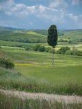 Сиротливое дерево кипариса в тосканском ландшафте Стоковая Фотография