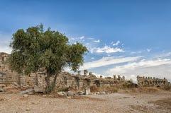 Сиротливое дерево на бортовых руинах стены города Стоковые Фото