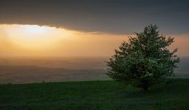 Сиротливое дерево на заходе солнца Стоковые Фото