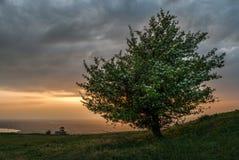 Сиротливое дерево на заходе солнца Стоковые Изображения