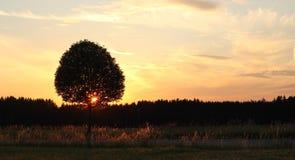Сиротливое дерево на заходе солнца Стоковые Фотографии RF