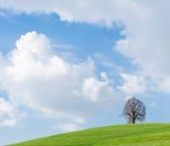 Сиротливое дерево на зеленом холме, голубом небе и белых облаках Стоковое фото RF