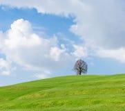 Сиротливое дерево на зеленом холме, голубом небе и белых облаках Стоковые Фотографии RF
