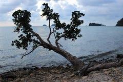 Сиротливое дерево на каменистом береге, остров Chang Koh Стоковое Изображение