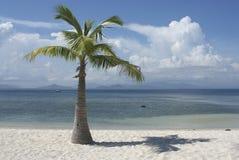 Сиротливое дерево на острове. Стоковая Фотография RF