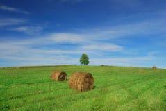 Сиротливое дерево на поле с связками сена Стоковые Изображения RF