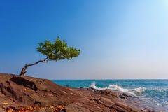 Сиротливое дерево Стоковая Фотография
