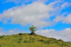Сиротливое дерево на холме, поле в гористых местностях, между vic-sur - cere и Le Lioran Стоковая Фотография