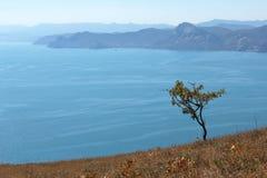 Сиротливое дерево на холме Стоковые Фотографии RF