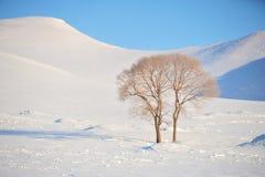 Сиротливое дерево пар в snowfiled стоковая фотография rf