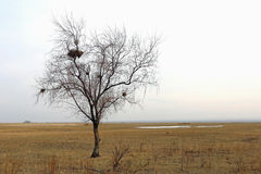 Сиротливое дерево с гнездами Стоковые Изображения