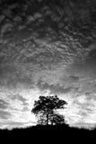Сиротливое дерево Стоковые Изображения