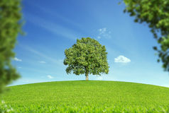 Сиротливое дерево Стоковое Изображение RF