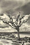 Сиротливое дерево Стоковая Фотография RF
