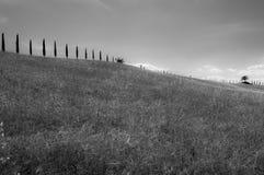 Сиротливое дерево, tuscan Стоковое фото RF