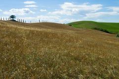 Сиротливое дерево, tuscan Стоковое Изображение