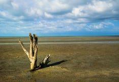 Сиротливое мертвое дерево на пляже Стоковое фото RF