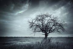 Сиротливое мертвое дерево. Стоковые Изображения