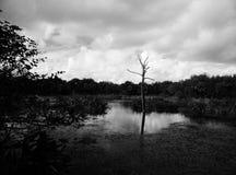 Сиротливое, мертвое дерево Стоковые Изображения RF