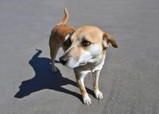 Сиротливое положение бездомной собаки Стоковое Изображение RF