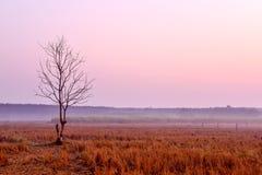 Сиротливое умирая дерево на зоре Стоковые Фотографии RF